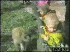 29 Gifs Of Animals Being Jerks - Gallery