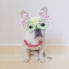 "'I'm ready for Spring!"", French Bulldog ❤❤"