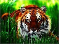 a tiger hunting it's prey