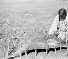 Жена Turkey Leg's подготавливает коровью шкуру. Шайены, 1922-1935 гг. Thomas Marquis Native American Nitrate Negative
