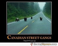 Bears in Canada; misschien toch maar niet kamperen in Canada. Canada Jokes, Canada Funny, Canada Eh, Canadian Memes, Canadian Things, Canadian Humour, All About Canada, Meanwhile In Canada, Animal Antics
