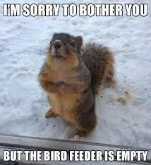 I-Am-Sorry-To-Bother-You-But-The-Bird-Feeder-Is-Empty-Funny-Animal-Meme-Image - Bird Watching HQ