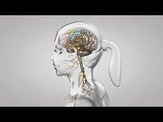 Au coeur des organes : Le fonctionnement du système nerveux - YouTube