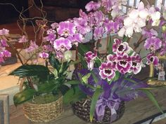 Clusters of orchids in wicker