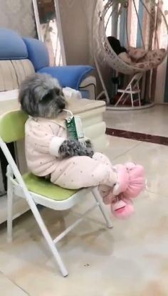 The dog who knows how enjoy life dog videos Cute Baby Videos, Cute Animal Videos, Funny Animal Videos, Funny Animal Pictures, Funny Videos Of Dogs, Dogs Video, Super Cute Puppies, Baby Animals Super Cute, Cute Baby Dogs