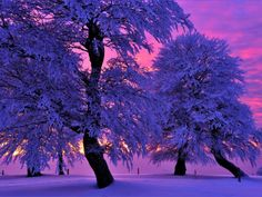 Im letzten Licht; photograph by Martin Schmidt. Winter evening at Schauinsland, near Freiburg im Breisgau, Germany.