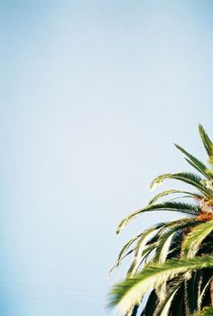 summer sky + palm tree
