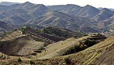 From: 35 Gorgeous Vineyards around the world. Porrera priorat county catalonia