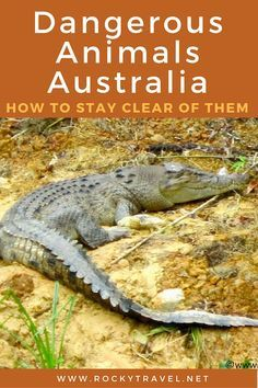 Dangerous Animals of Australia: How to Stay clear of them.
