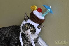 Piña Colada Cat Hat Hats for Cats Costumes for cats clothes