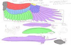 anatomy of a hawk - Google Search