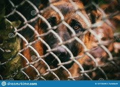 Behind The Fence Is A Shaggy Dog Stock Photo - Image of bunch, nature: 167735348 Dog Stock Photo, Creative Photos, Shaggy, Stock Photos, Dogs, Nature, Cute, Animals, Image