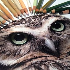 Artist Draws Gorgeous Animals And Shows Us What She Made Them With