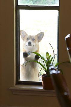 """Please let me in"""