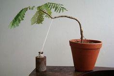 tree shaping techniques | Guide To Bonsai Trees | Bonsai Tree Gardener