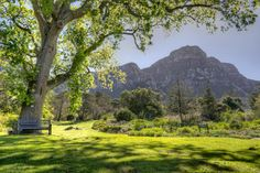 Nestled on the eastern slopes of Table Mountain, Kirstenbosch Botanical Garden boasts over 22 000 indigenous plant species, and was the first botanical garden to be declared a UNESCO World Heritage Site.