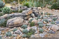 Succulents and More: Agave Garden at the Arizona-Sonora Desert Museum Desert Gardening, Desert Plants, Arizona Pools, Sonora Desert, Desert Landscape, Water Wise, Agaves, Public Garden, Baja California