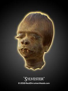"Real Shrunken Head Photo.  Child ""Sylvester"" www.RealShrunkenHeads.com Tsantsa: Oddities & Curiosities"