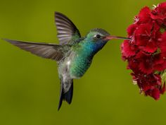 Hummingbird's wings beat at 8 to 12 beats per second, which is about 600 flaps per minute!!!!!