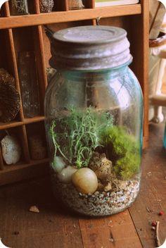 Vintage Blue Mason Jar Terrarium by Run2theWild on Etsy, $35.00