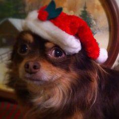 Buster says Merry Christmas!