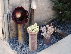 copper tubes for succulents...