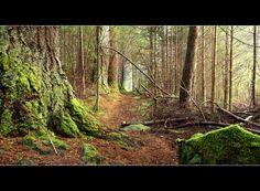 Hermitage Path | raining with mist... | Angus Clyne | Flickr