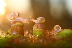 Magical Macro World Of Snails And Bugs By Vadim Trunov | Bored Panda Vadim Trunov, a self-taught nature photographer based in Voronezh, Russia