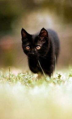 360024129 Untitled Cool Cats, I Love Cats, Quotes About Cats, All About Cats,