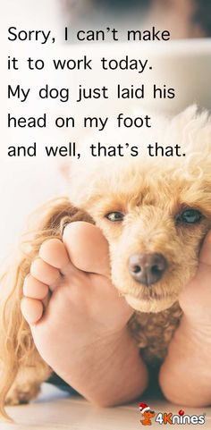 What Monday feels li What Monday feels like Dog Quotes Love, Dog Quotes Funny, Funny Animals, Cute Animals, Crazy Animals, Animal Funnies, Monday Feels, Pet Rats, Pets