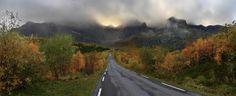 scandinavian forest - Google Search