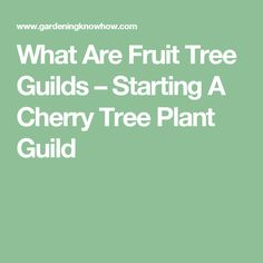 What Are Fruit Tree Guilds – Starting A Cherry Tree Plant Guild