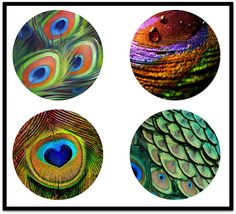 Peacocks - Peacock Feathers - Digital Download Sheets - 38mm Pendants - Bottlecaps - 38mm Necklaces - 38mm Circles - DDP457