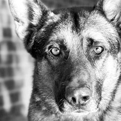 #animals #dogs #nkla #