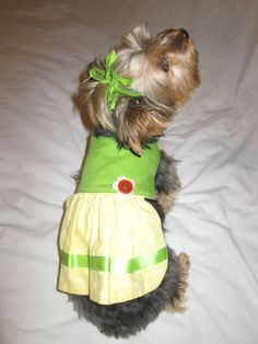 Simple Ribbon Bow Adorable Dog - a41f838f44c3dcb01c50e305818cb40e--cute-dogs-hair-ties  Picture_855720  .jpg