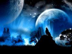 Αποτέλεσμα εικόνας για dark forest wolf