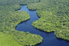 For years now there have been fears that the forest was likely to experience a mass die-off of trees because of rising temperatures caused by climatic changes, with rising carbon dioxide (CO2) levels a principal cause. But scientists now say the gas is affecting the Amazon in two ways.    It is certainly increasing temperatures, they say, with the risk of droughts and other dangers to arboreal life. But it is also providing an airborne fertiliser.