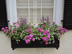 25 Most Beautiful Flowers Ideas For Window Boxes 2019 1 Insulate Windows Generally, insulation is Window Box Plants, Fall Window Boxes, Window Box Flowers, Window Planter Boxes, Planter Ideas, Window Ideas, Full Sun Container Plants, Container Gardening, Succulent Containers