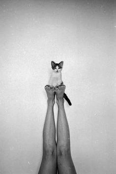 Serie: Un día, un gato