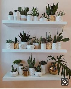 33 Ideas succulent garden indoor wall for 2019 Cute Dorm Rooms, Cool Rooms, Living Room Designs, Living Room Decor, Decoration Plante, Farmhouse Side Table, Room With Plants, House Plants, Succulent Arrangements