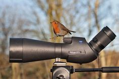 Animal observation with the #ZEISS DiaScope 85 FL – even the animals love it.