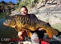 CARP GRAN CANARIA.com