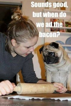 """Sounds good, but when do we add the bacon? - Not yet!""  ~ Dog Shaming shame - Pug Chef"