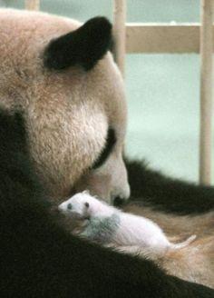 Mommy & Baby Panda