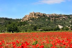 Gordes, Provence, France Poppies in full bloom