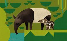 From my new wildlife book 'Dieter Braun - Die Welt der wilden Tiere – Im Süden', (Knesebeck Verlag, september 2014)