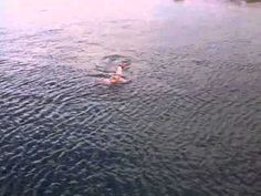 Women swimming with Dusty the wild Dolphin at Doolin Co Clare Ireland - YouTube
