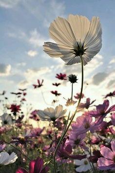 You belong among the wild flowers...