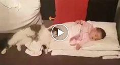 Protetor Gatinho Recua-se a Estar Afastado Do Bebé