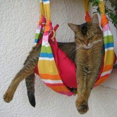 Fritzis Katzenpension - Alles für die Katz